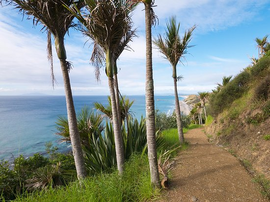 Things To Do In Mangawhai - Walking