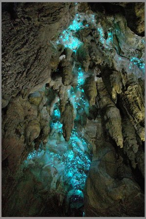 Things To Do In Mangawhai - Glow Worms